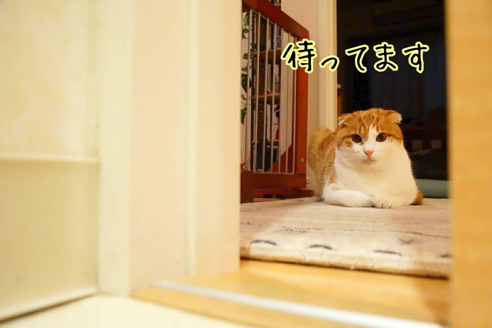 出待ち&キラリ12