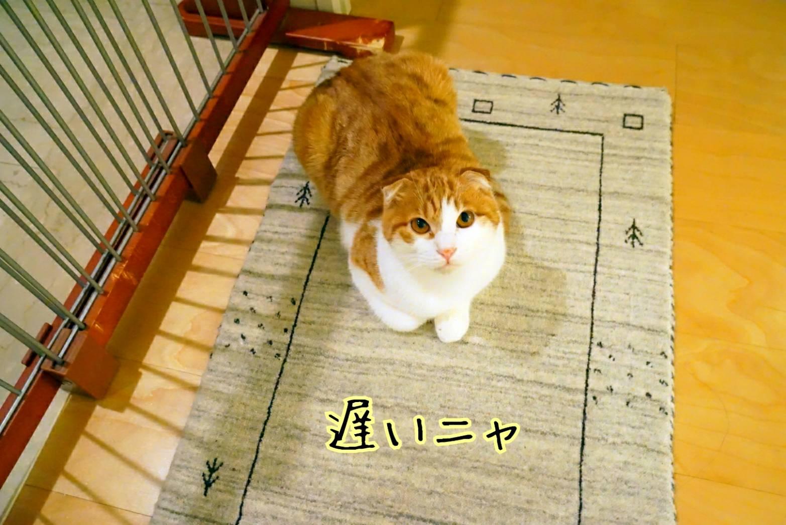 出待ち&キラリ13