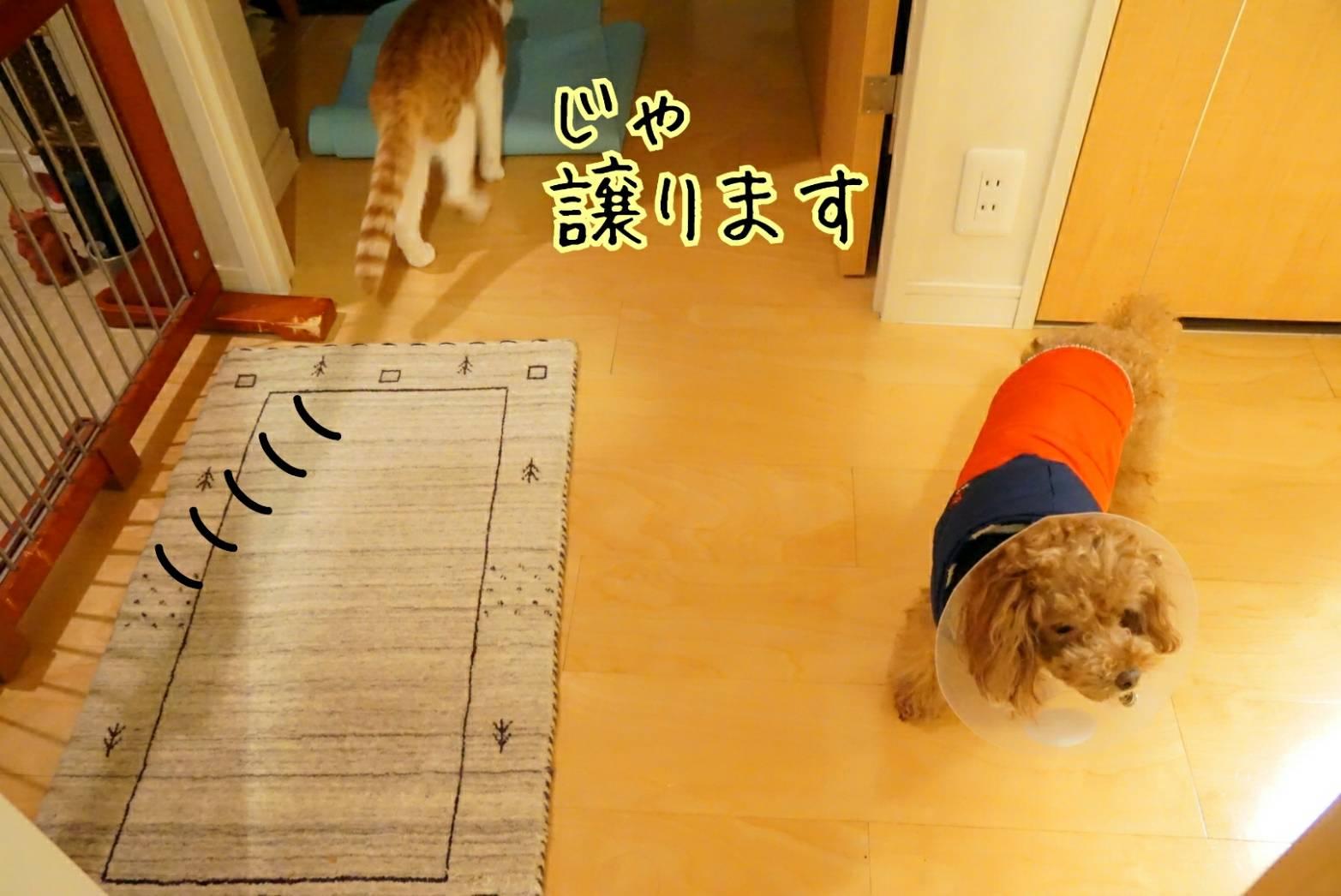 出待ち&キラリ15