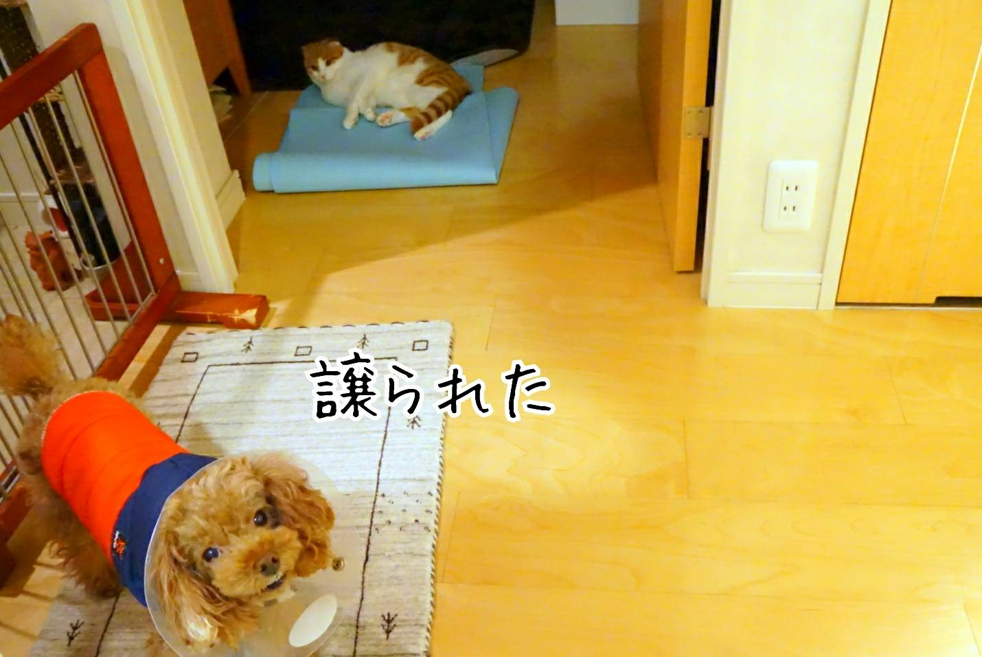 出待ち&キラリ17