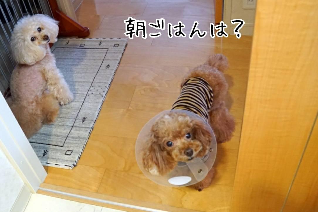 出待ち&キラリ29