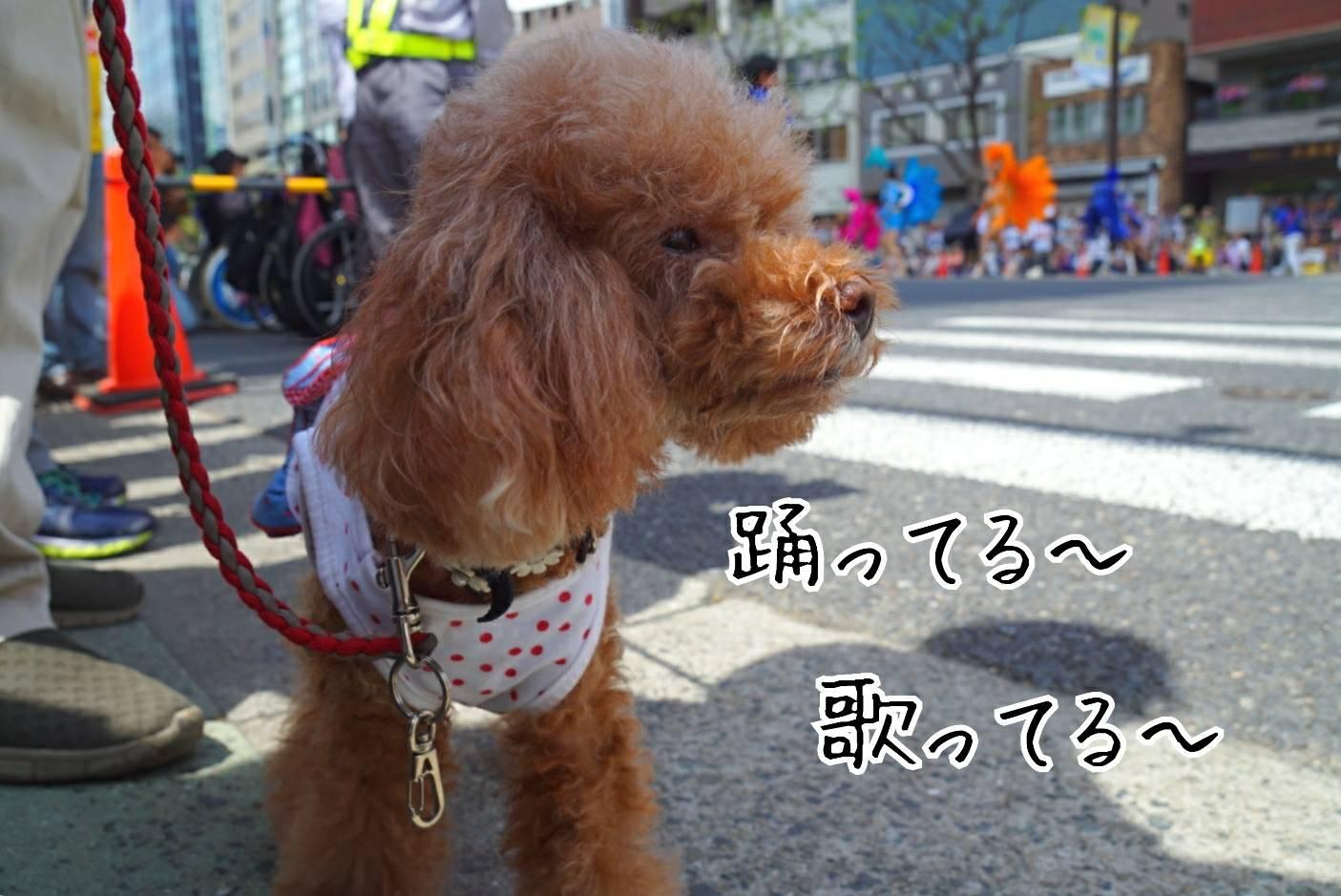 神戸まつり15