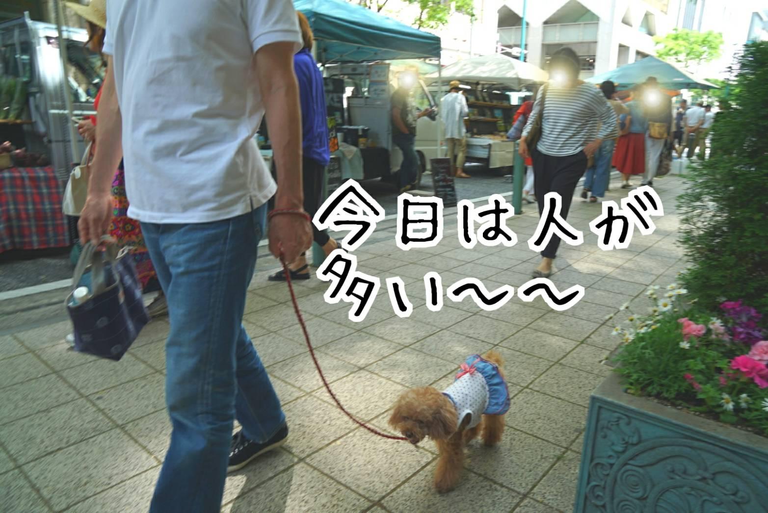 神戸まつり18