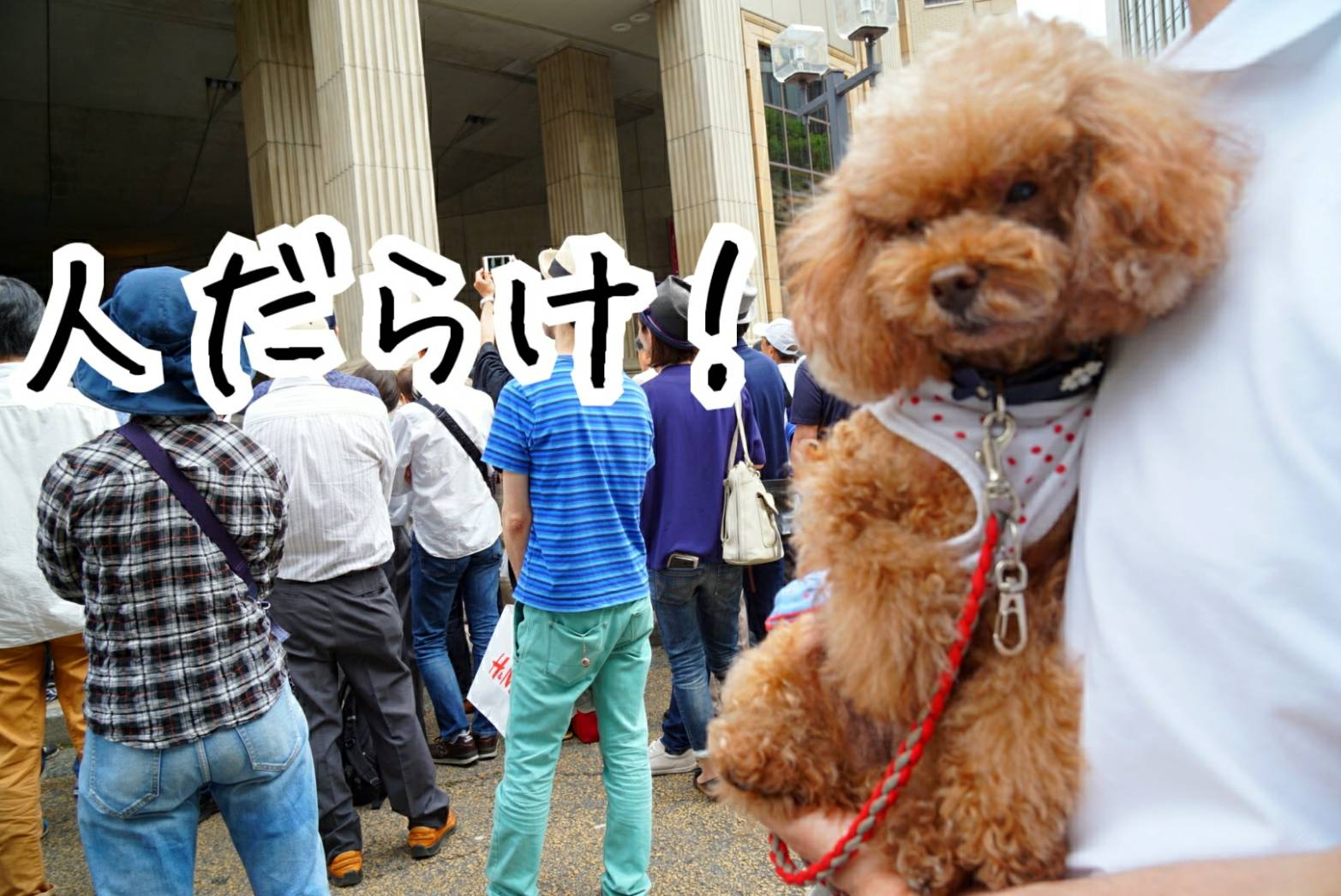 2019神戸祭り16