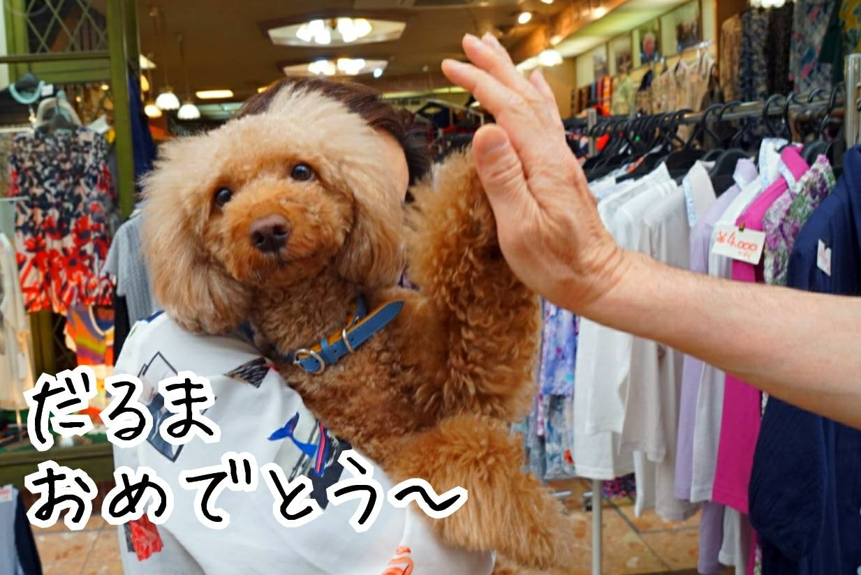 神戸祭りラファ君12