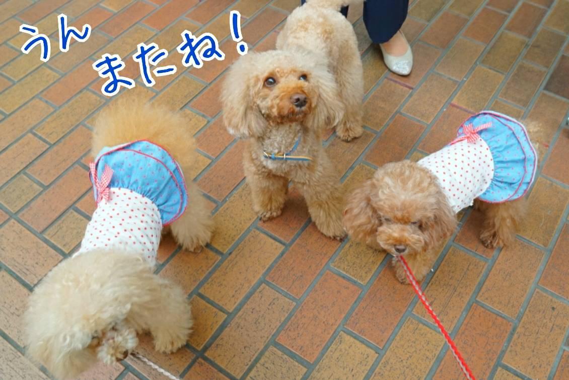 神戸祭りラファ君15