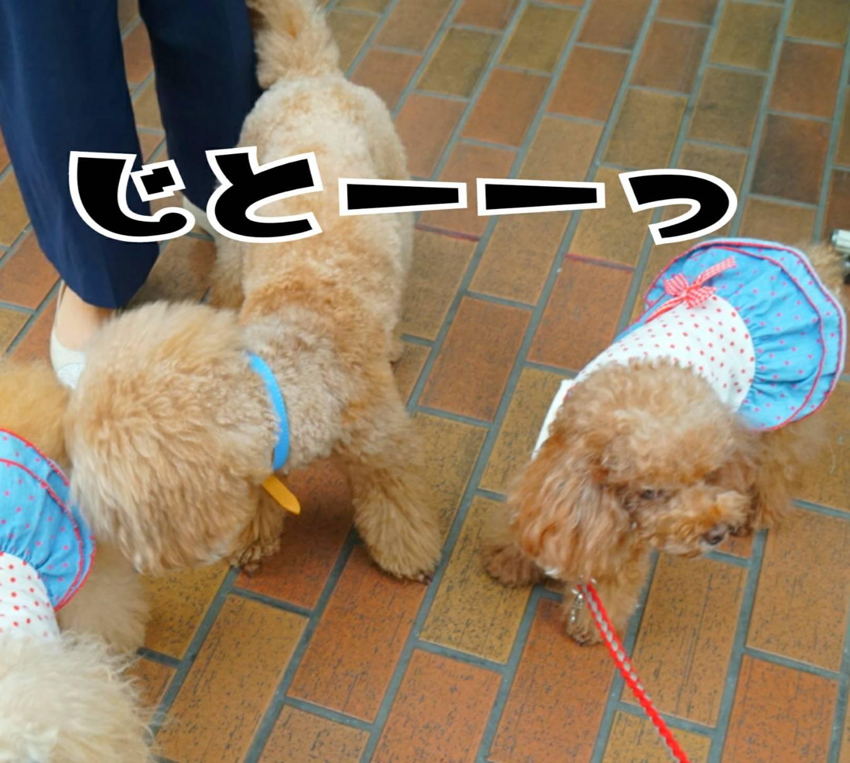 神戸祭りラファ君18
