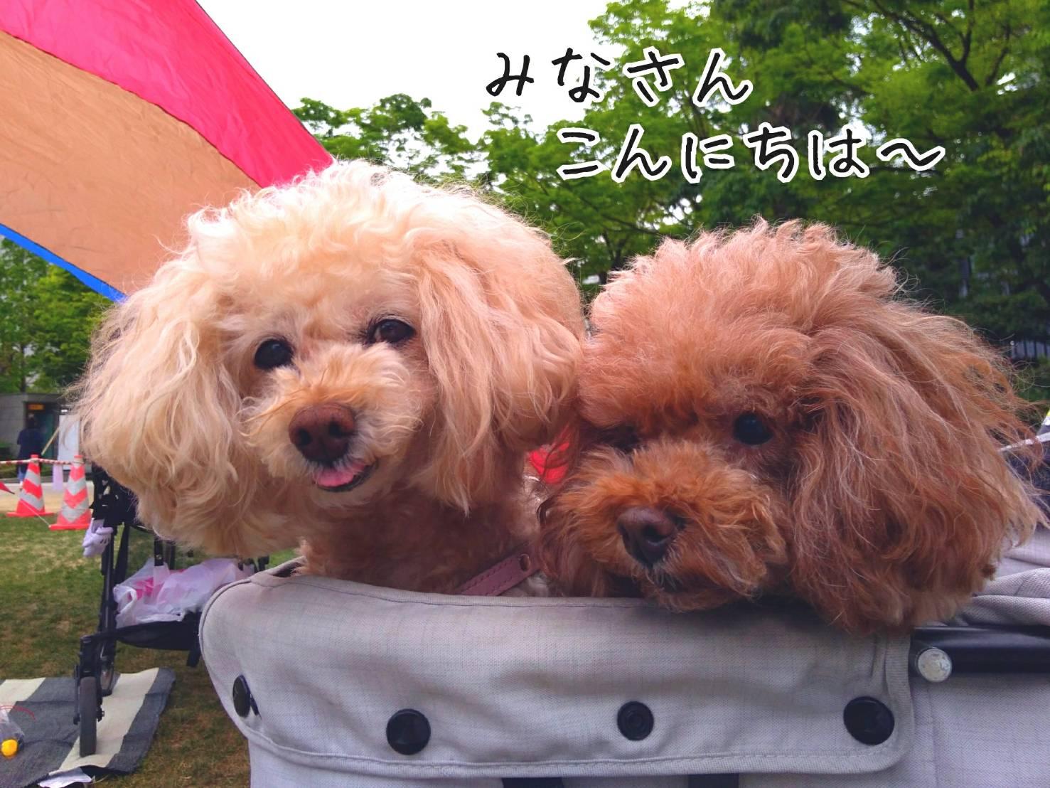 神戸祭り前日11