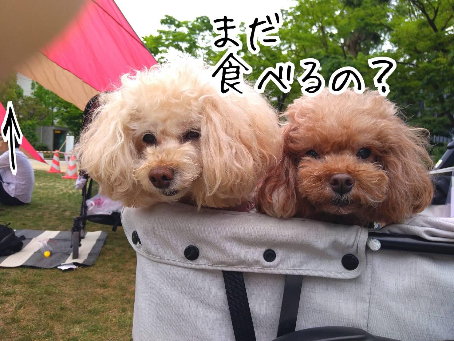 神戸祭り前日18