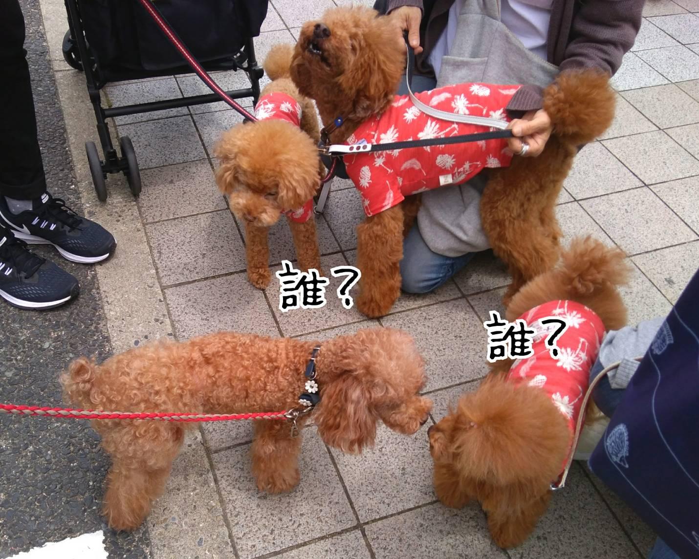 201905神戸祭り前日12
