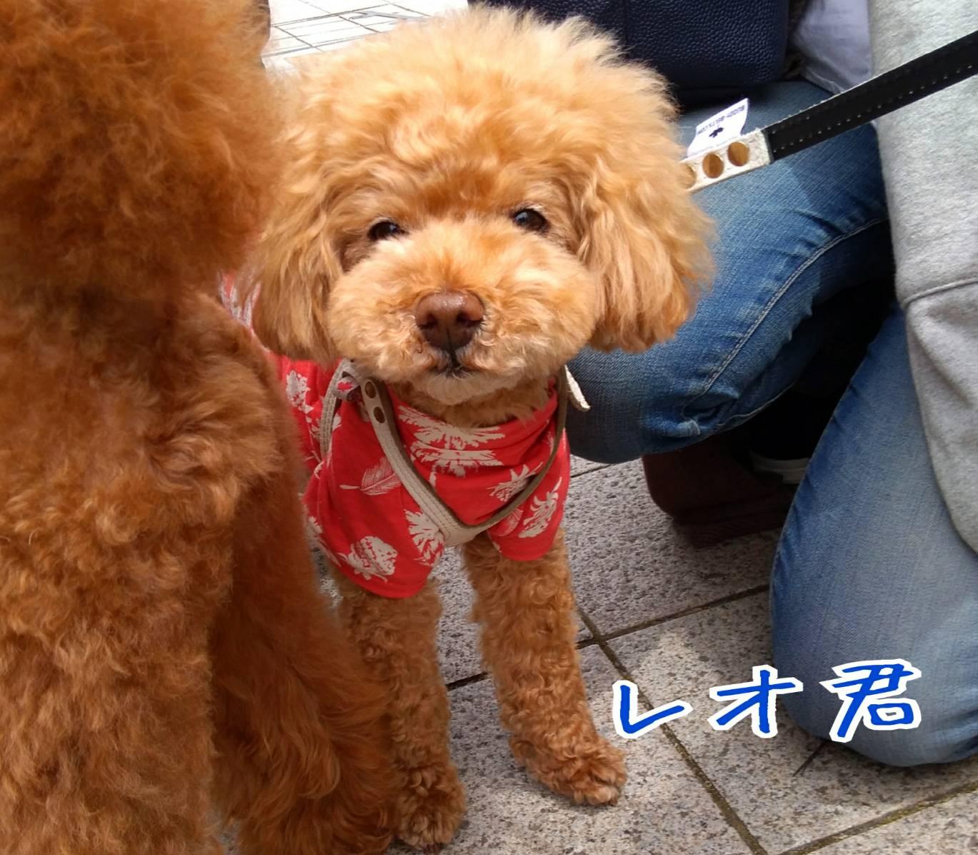 201905神戸祭り前日14