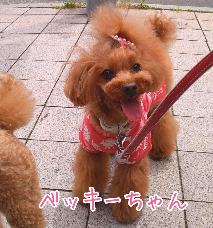 201905神戸祭り前日16