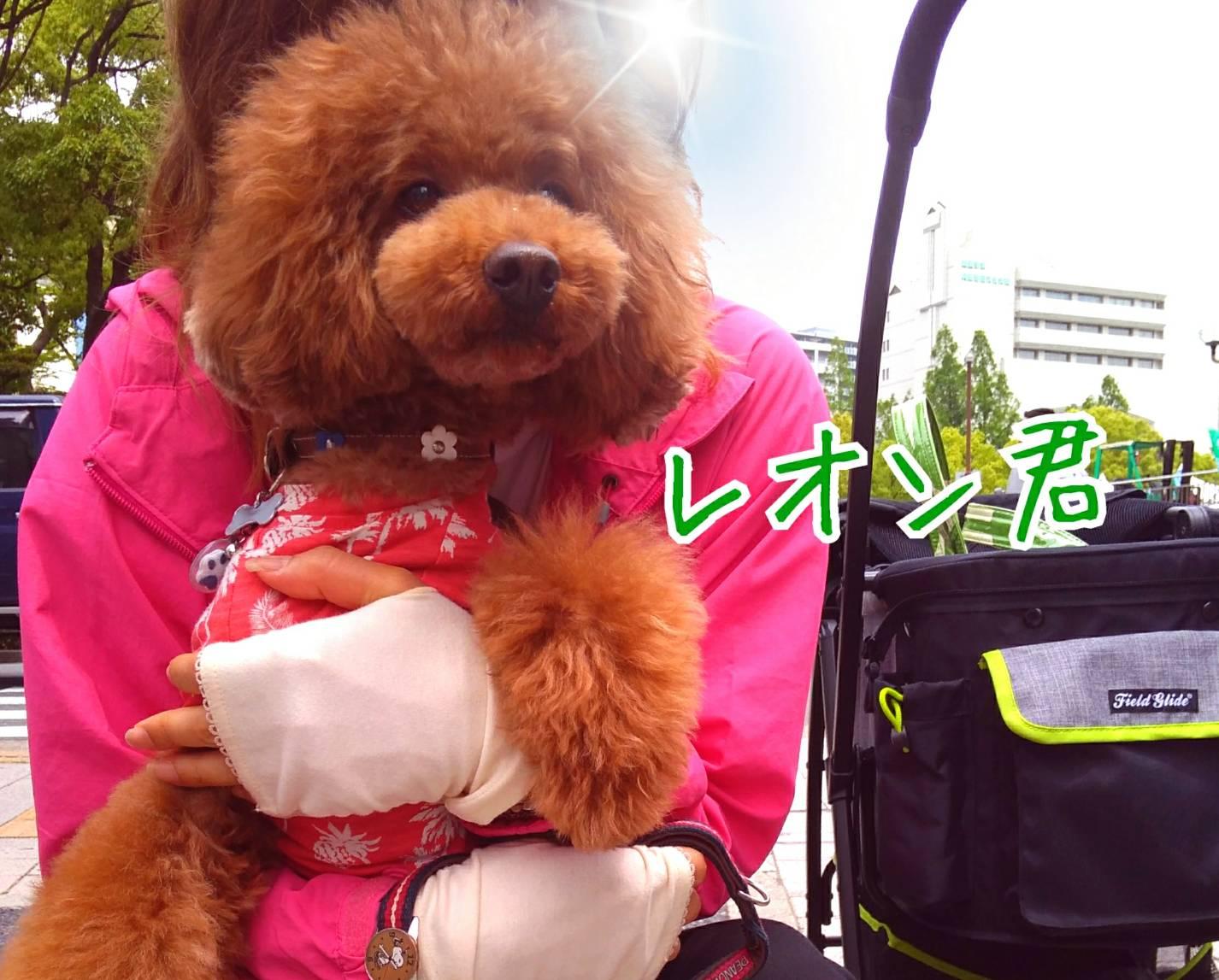 201905神戸祭り前日17