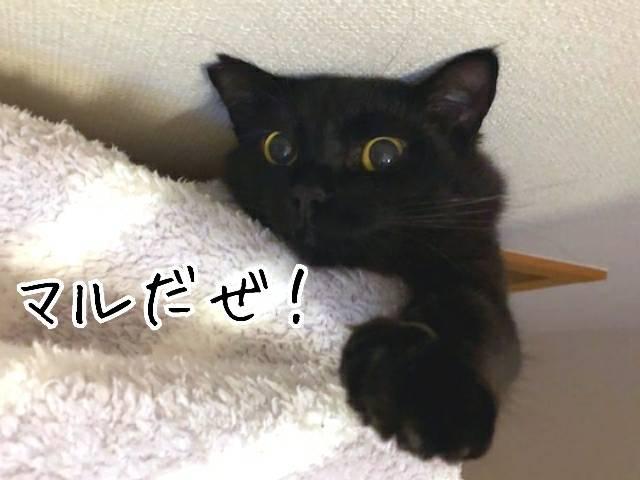 幸せ通信銀マル20190513