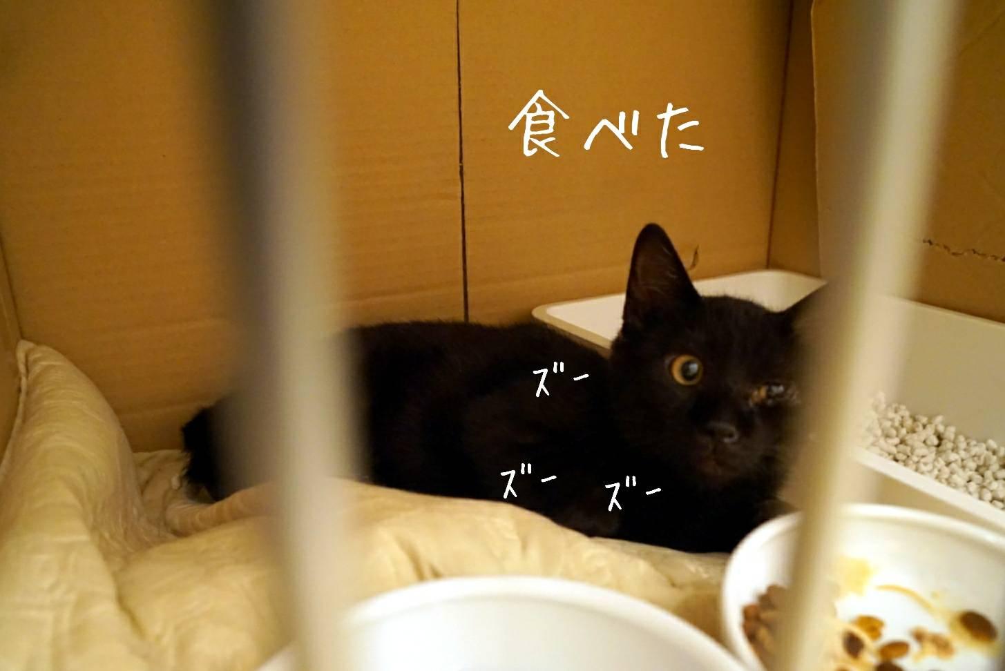 黒猫ジジ16