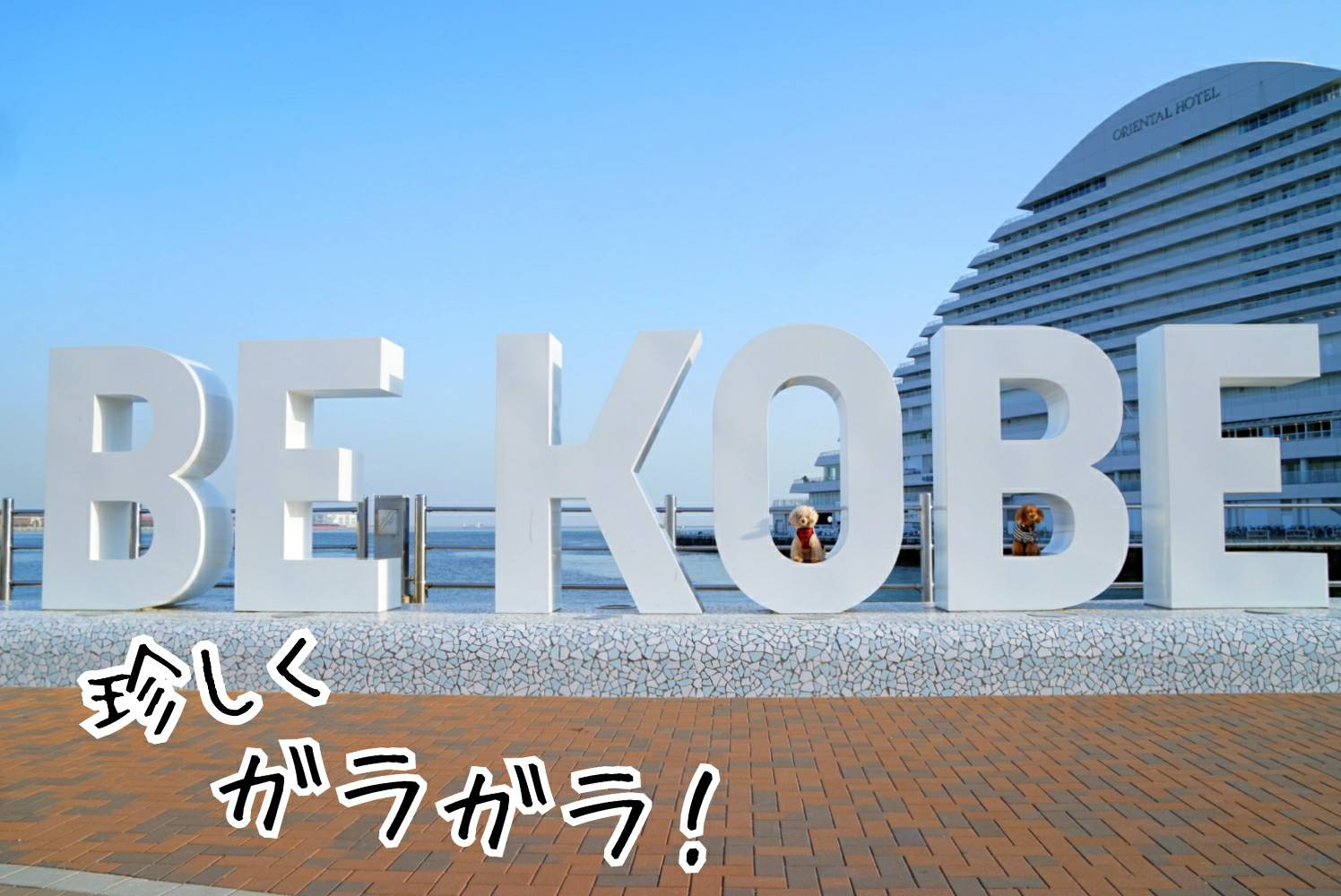 2019BEKOBE12.jpg