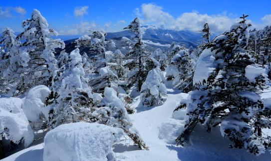 樹氷発達する北八ヶ岳