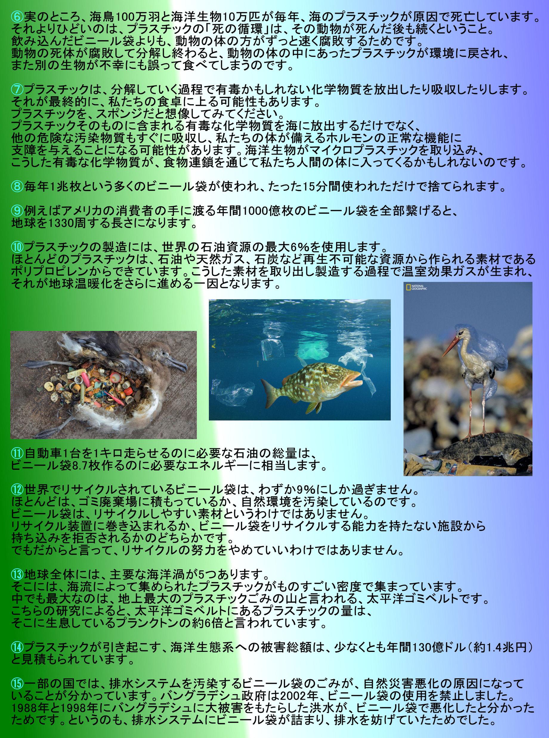 gomichirashi2a.jpg