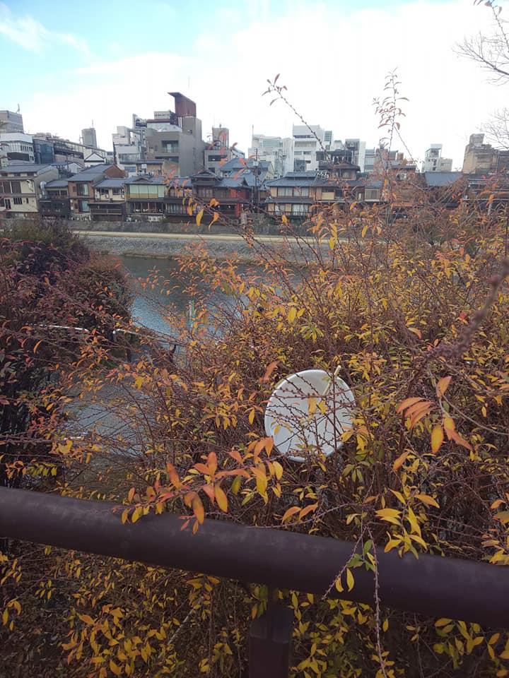 kamogawagomi7.jpg