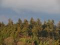青葉山から見た八幡杜