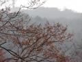 アカシデと霞む山