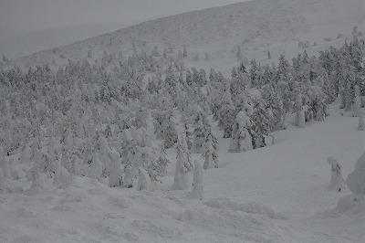 s-樹氷ナイトDSC_1530_01