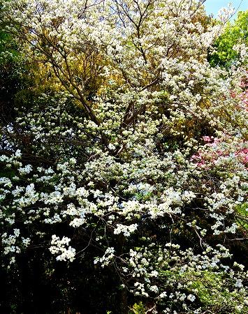 s-アリタキ植物園DSC_2817_01