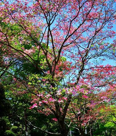 s-アリタキ植物園DSC_2818_01