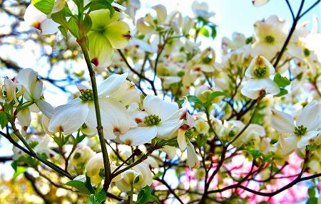 s-アリタキ植物園DSC_2819_01
