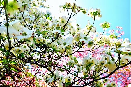 s-アリタキ植物園DSC_2820_01