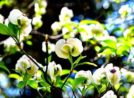 s-アリタキ植物園DSC_2821_01