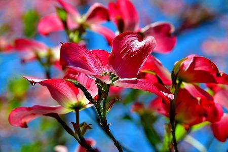 s-アリタキ植物園DSC_2822_01