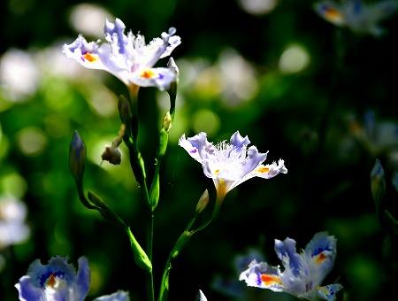s-アリタキ植物園DSC_2829_01
