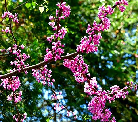 s-アリタキ植物園DSC_2832_01