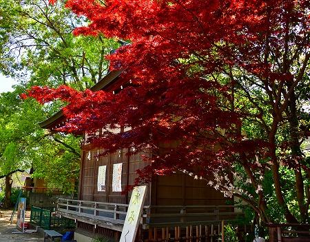 s-香取神社DSC_2864_01