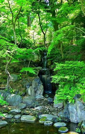 s-古河庭園DSC_3403_01