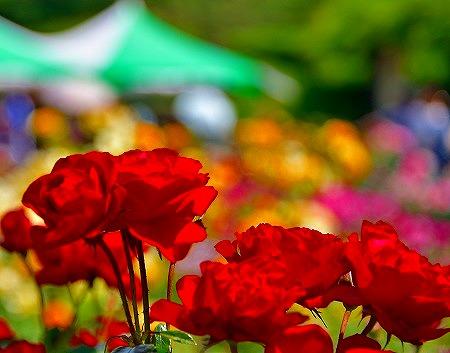 s-神代植物公園DSC_3416_01