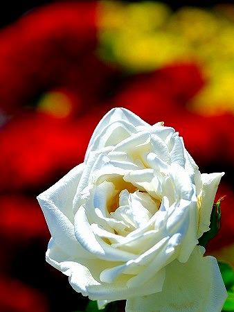 s-神代植物公園DSC_3428_01