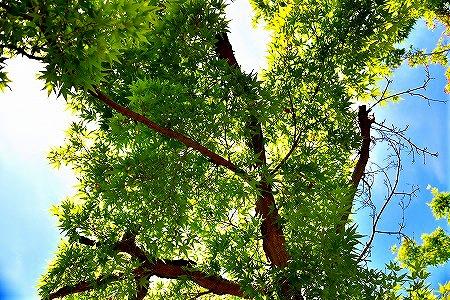 s-神代植物公園DSC_3458_01