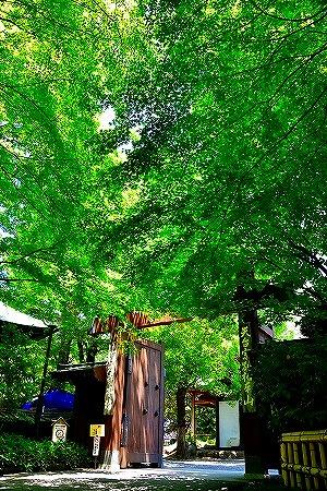 s-神代植物公園DSC_3480_01