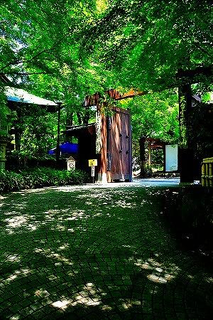 s-神代植物公園DSC_3481_01