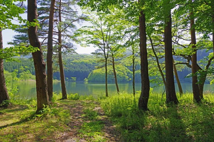 緑深い湖の傍