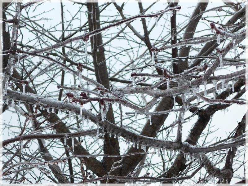 2019年3月22日雨氷 1