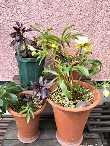 gardening451