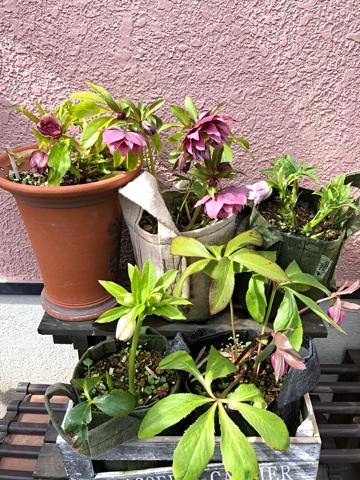 gardening457