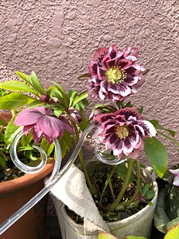 gardening458