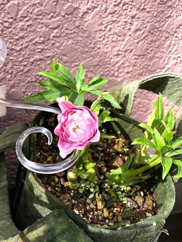 gardening459