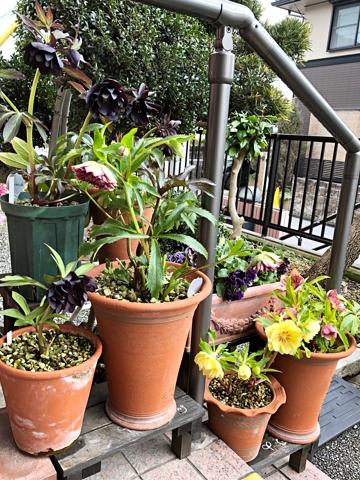 gardening463