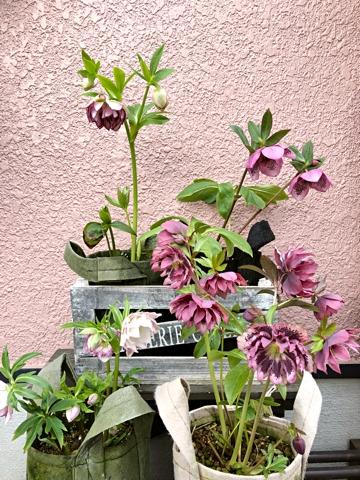 gardening465