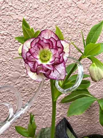 gardening467